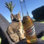 Image for the Tweet beginning: So. Wochenende. Jetzt Bier und BBQ.