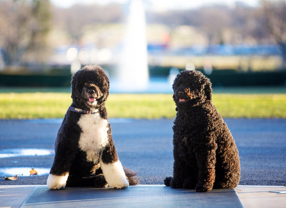 @MichelleObama's photo on #NationalPetDay