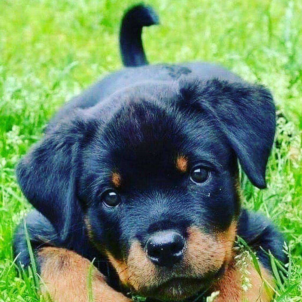 Happy National Pets Day!❤️ https://t.co/Vjxqw8hBc6