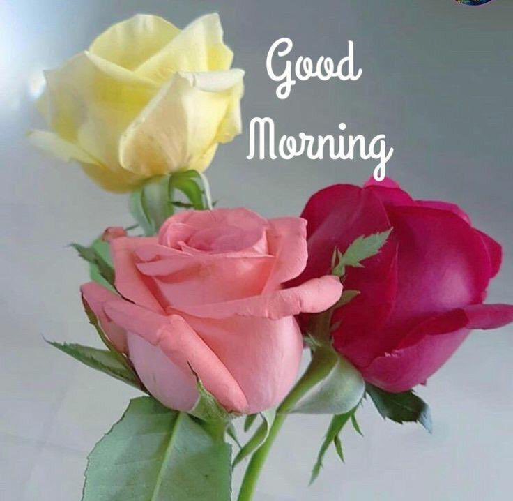 """GM @SrBachchan Boss Thought for 2day """"Have more than you show. Speak less than you know"""" Have a nice day and a blessed week ahead 💐💕🌹💕 Love & Regards ~ प्रवीण आहूजा (नॉएडा)"""