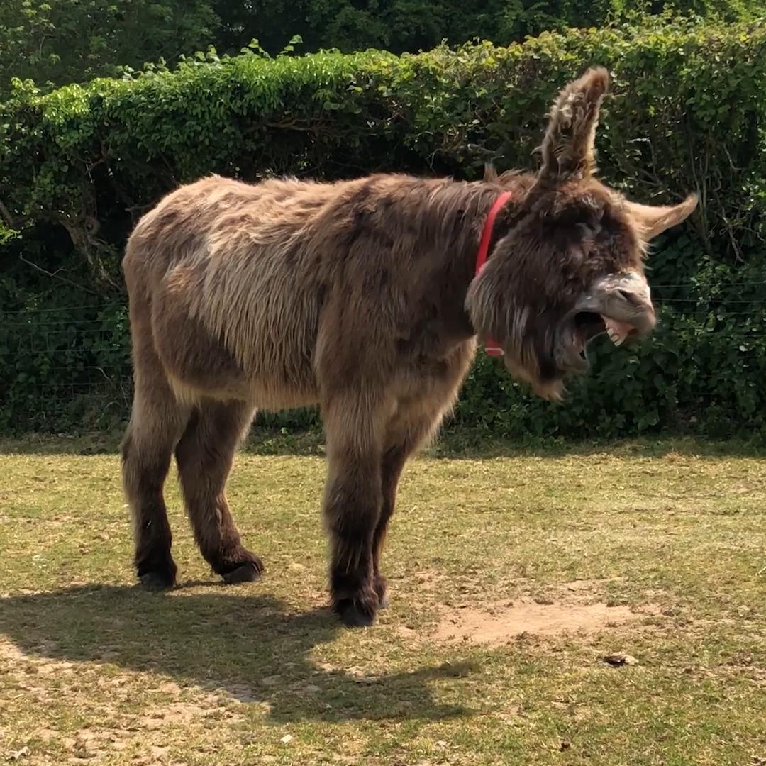 @DonkeySanctuary's photo on #MondayMorning