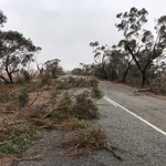 Stage 3 of #TheGreatSandalwoodTransect is underway — at Charles Darwin Reserve & Ninghan Station this week — after a harrowing drive through hundreds of kilometres of fallen trees & debris from #CycloneSeroja  Little power & poor comms out here,  so 'off grid' for a few days.