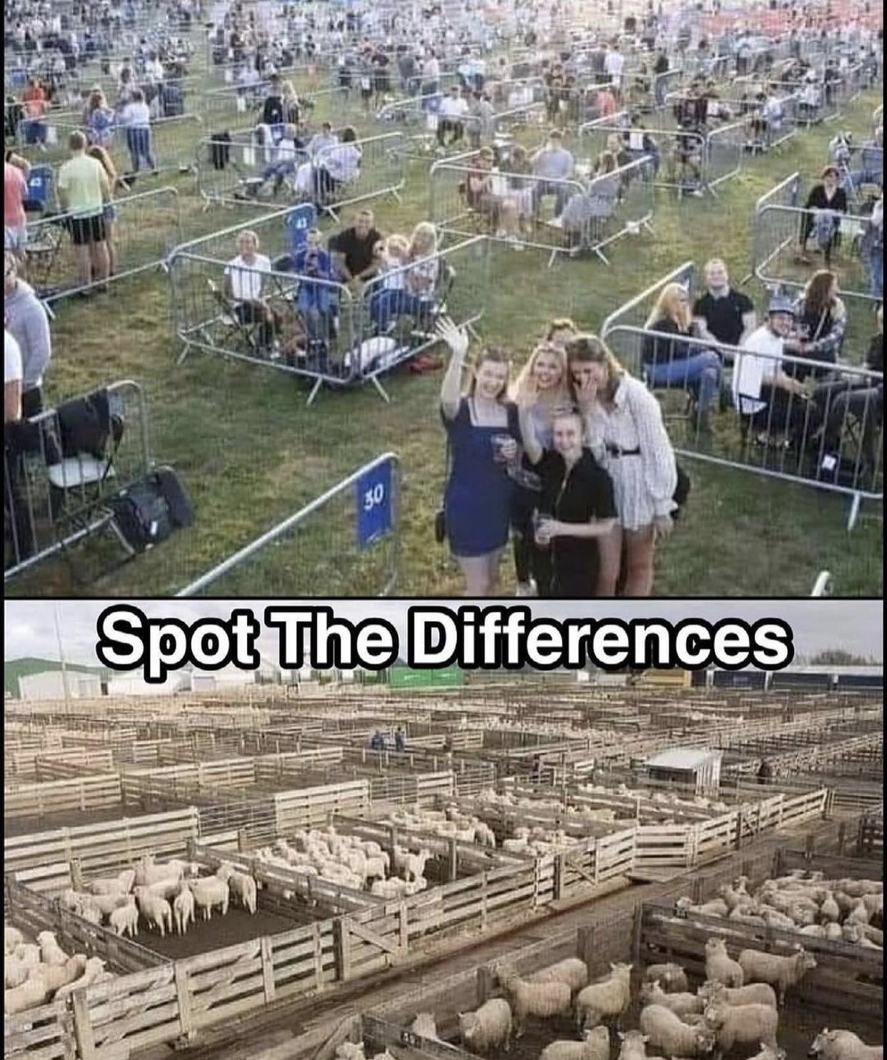 Sheeple?