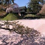marugotoaomoriのサムネイル画像