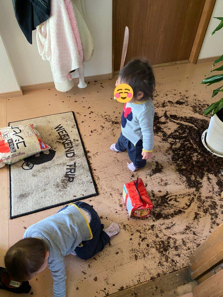 この後のお掃除が大変そう・・・!めちゃくちゃになった家の中と可愛い犯人が写った写真が話題に!