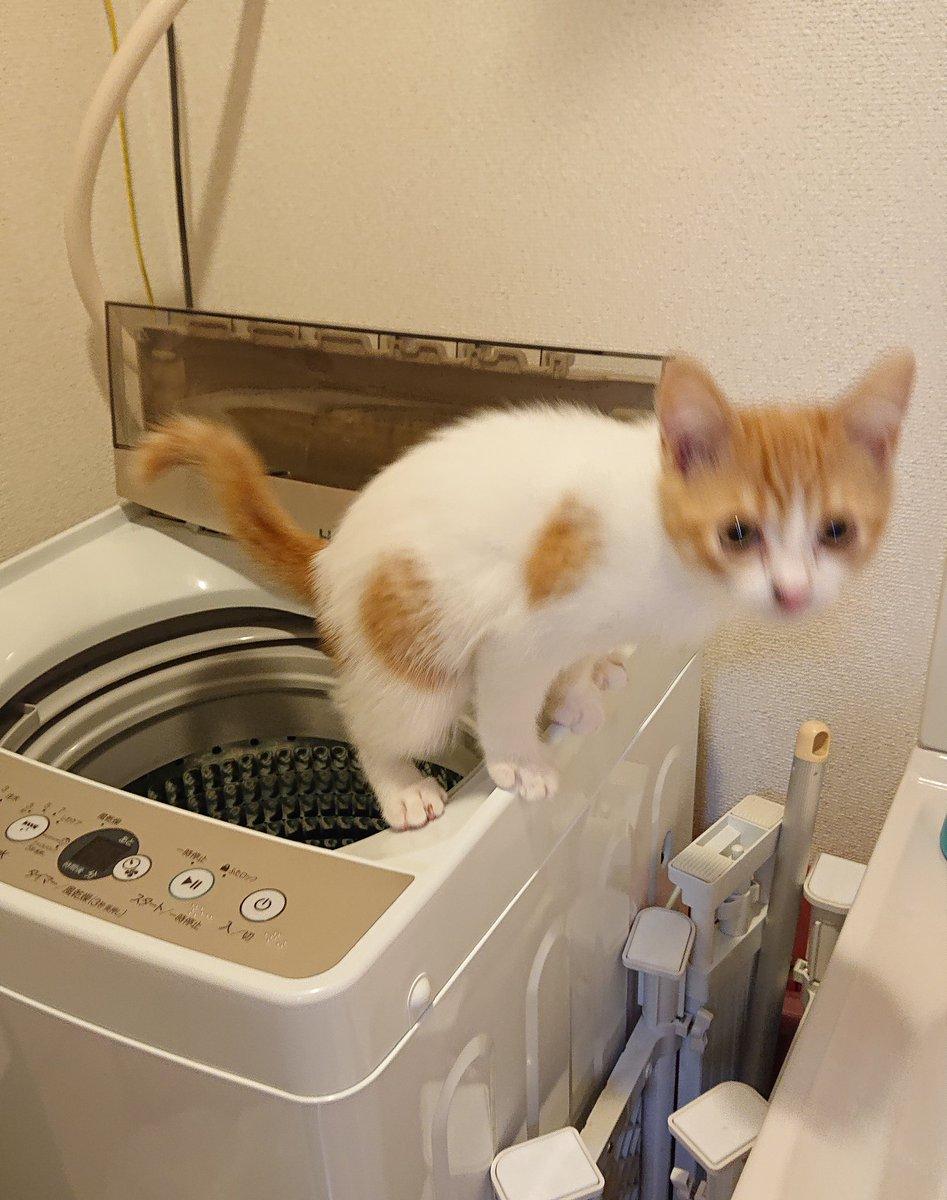 まさかトイレそこでしてる?洗濯機の上で猫が・・・その態勢は!