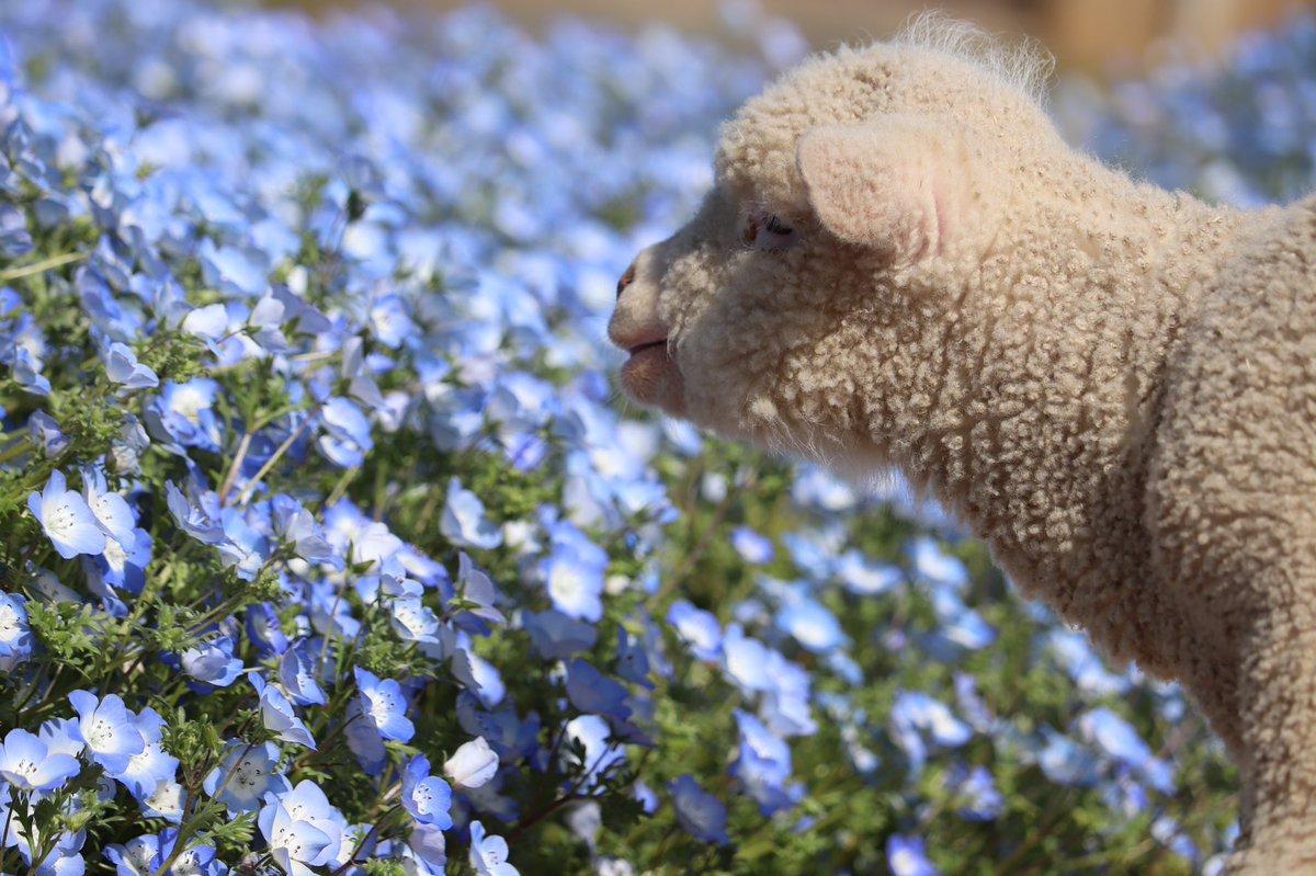 イングランドの丘 動物スタッフ【公式】さんの投稿画像