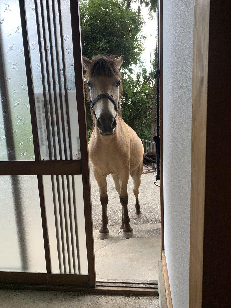 玄関を開けたら電車や馬が!これはごく平凡な日常風景…か?w