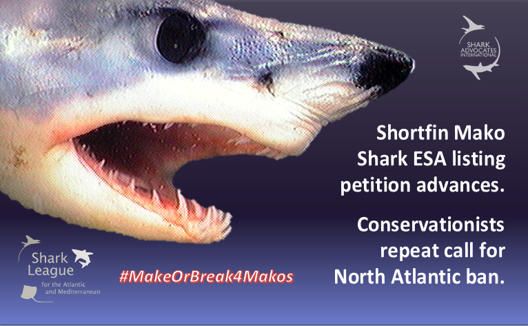 """North Atlantic shortfin mako depletion is among the world's most pressing shark conservation crises, & the U.S. 🇺🇸 is critical to achieving the multilateral ban needed to stem the decline,"" says @SharkAdvocates   #SharkLeague #Maketime4makos"