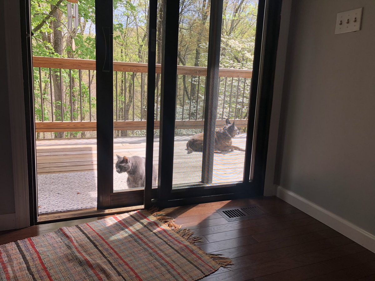 Even when he has to share the back deck with his grey sister, your #DailyScout still loves the fresh spring air. https://t.co/u0m7MWM6O2