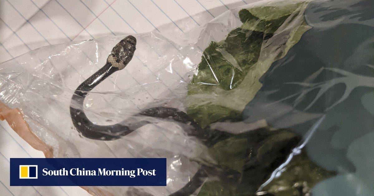 Pembeli menemukan ular dalam bungkusan sayur yang dibeli di sebuah supermarket di Sydney, Australia.