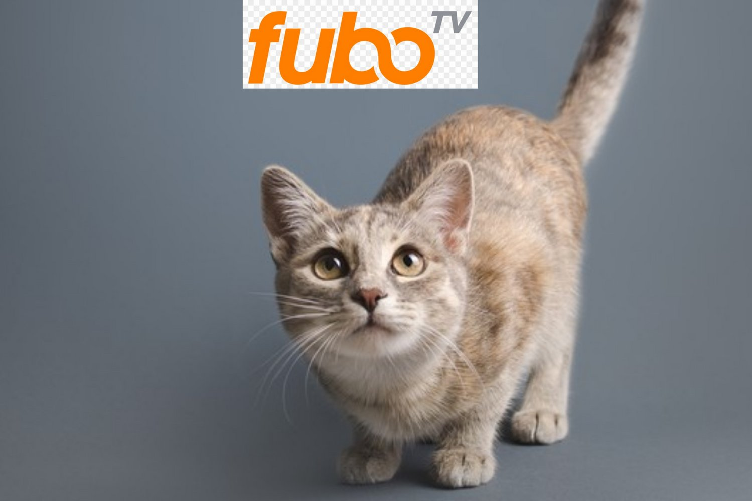 Fubo TV (FUBO) Stock Breakout Alert: What to Expect Now?