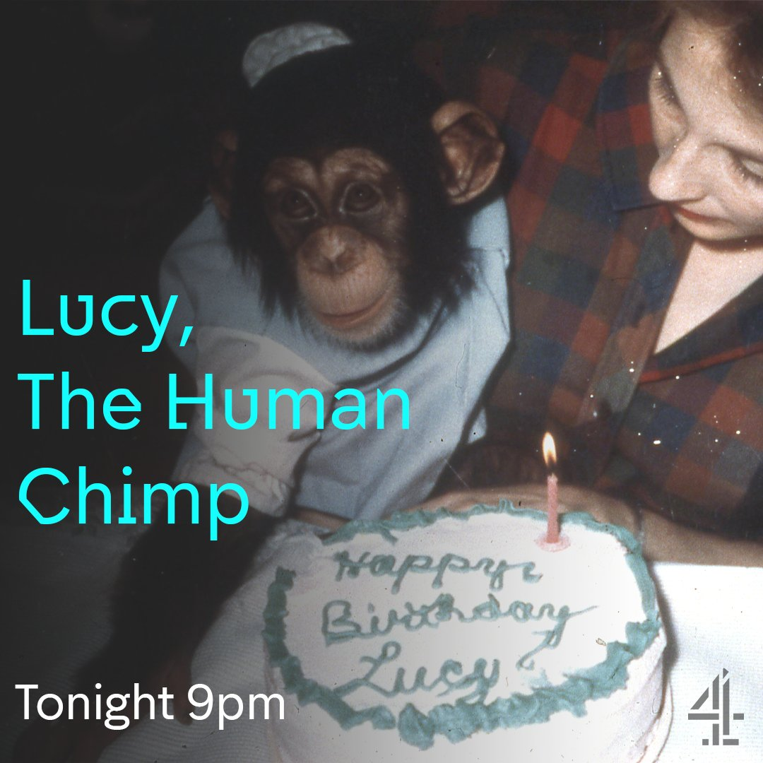 lucy, the human chimp - photo #26