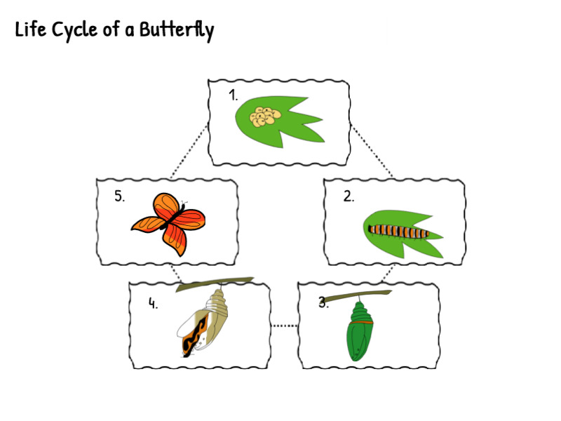 Students in <a target='_blank' href='http://twitter.com/KWBCunningham'>@KWBCunningham</a> and Ms. Bailey's classes put the butterfly life cycle in order this week after learning about Caterpillars and Butterflies. 🦋<a target='_blank' href='http://twitter.com/apslibrarians'>@apslibrarians</a> <a target='_blank' href='http://twitter.com/Tech4Learning'>@Tech4Learning</a> <a target='_blank' href='http://twitter.com/APSscience'>@APSscience</a> <a target='_blank' href='http://twitter.com/lsullivan'>@lsullivan</a> <a target='_blank' href='http://twitter.com/SohrAPS'>@SohrAPS</a> <a target='_blank' href='http://twitter.com/KWBLittman'>@KWBLittman</a> <a target='_blank' href='http://twitter.com/AutismAPS'>@AutismAPS</a> <a target='_blank' href='http://search.twitter.com/search?q=kwbpride'><a target='_blank' href='https://twitter.com/hashtag/kwbpride?src=hash'>#kwbpride</a></a> <a target='_blank' href='https://t.co/Ji5fmAaG1W'>https://t.co/Ji5fmAaG1W</a>