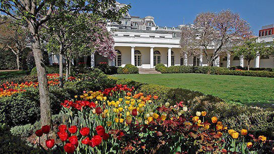 @BeschlossDC's photo on Rose Garden