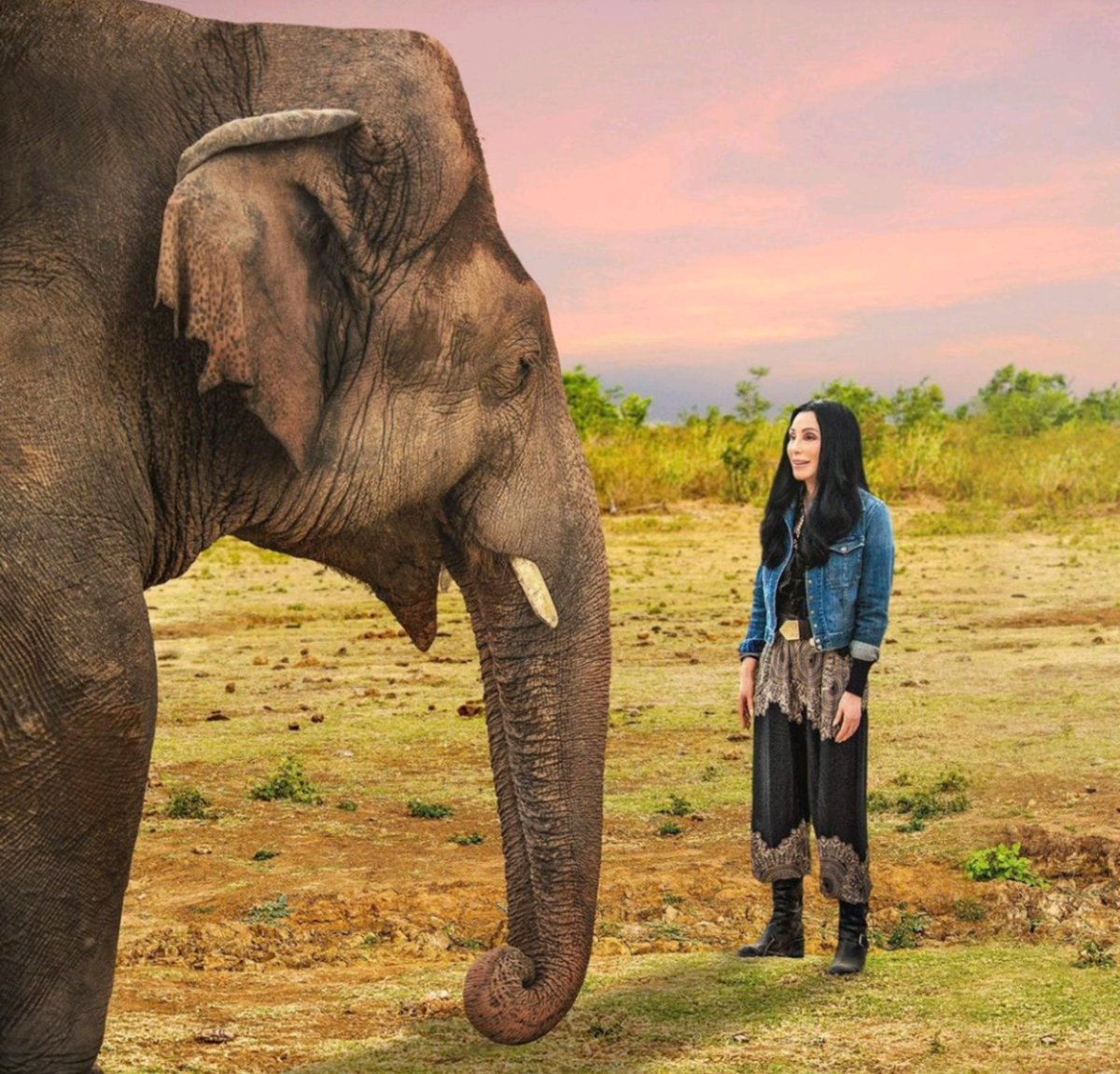 @cher This photo tells yours and Kaavans story❤️ A 4 year struggle to this. May we never forget this...A DREAM IS A WISH YOUR HEART MAKES🙏🏼 Dreams really do come true, dont they Babe🥰🐘💖