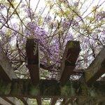 chibatopiのサムネイル画像