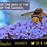 Image for the Tweet beginning: The hum of the Bees