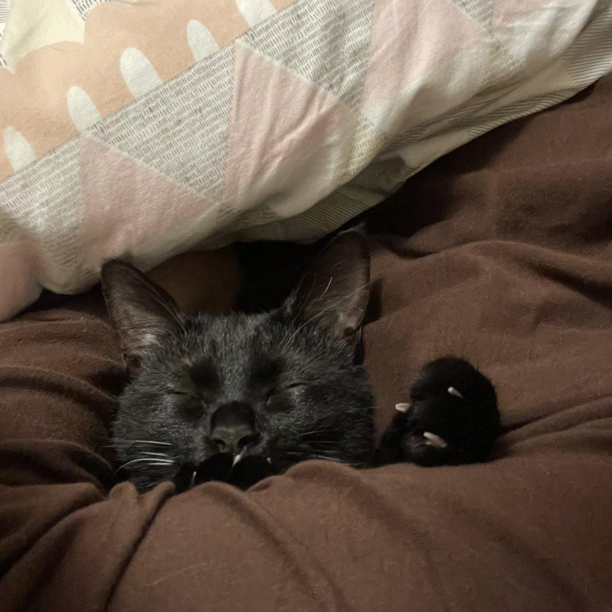 やっぱりと言うかなんと言うか…w何もしてなかった愛猫たち!