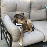 Image for the Tweet beginning: #bestfriend, on the patio furniture