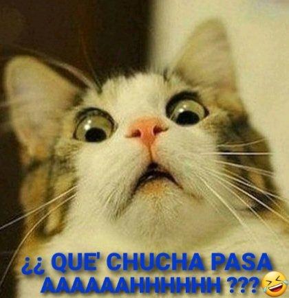 Aqui' yo,como siempre viendo #PautaLibre weones🤣😂😊😜 de la @LaRedTV con las secas @alejandramatus y @paulamolinat ! DARE' MI HUMILDE OPINIO'N DEL @Ejercito_Chile : valen callampin los cara de rajas y mafiosos! Eso!👊👌 #NuncaMasDerecha  #TercerRetiroSinTC  #TercerRetiroDeAFP
