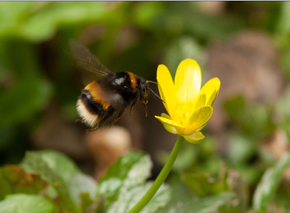 Camden strives for a more sustainable, happier and ecologically healthier borough with its new biodiversity strategy.   Find out more on how it will benefit your business and have your say on it here: https://t.co/RQBTQDPtWR #PledgeNetZeroCamden https://t.co/K0pss3vK5N