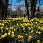 Image for the Tweet beginning: Spring!