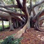 Image for the Tweet beginning: Un arboreto da visitare, Villa