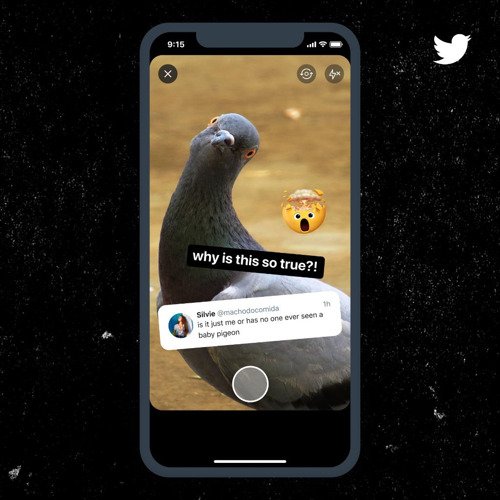 """A Fleet featuring a Tweet from @machodocomida that states: """"is it just me or has no one seen a baby pigeon"""" with an image of a pigeon in the background and text that reads: """"why is this so true?"""""""