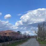 Walking around the neighborhood, admiring the beautiful, fluffy cumula nimbus clouds  💙