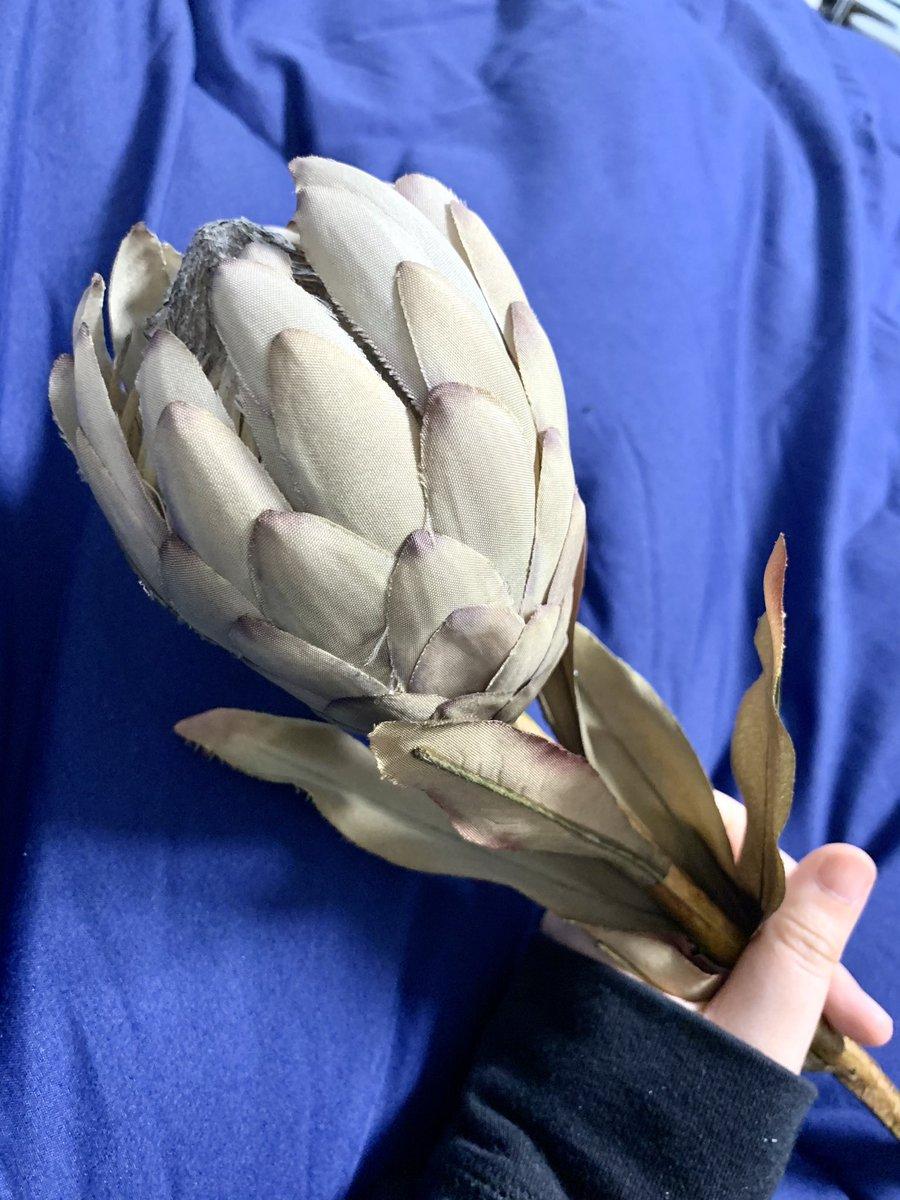 コレは資料用に買ったキングプロテアちゃんの造花 https://t.co/Bk3GpqNHlr