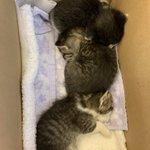 生まれたての猫の赤ちゃんが捨てられた。物資の支援をよろしくお願いいたします。