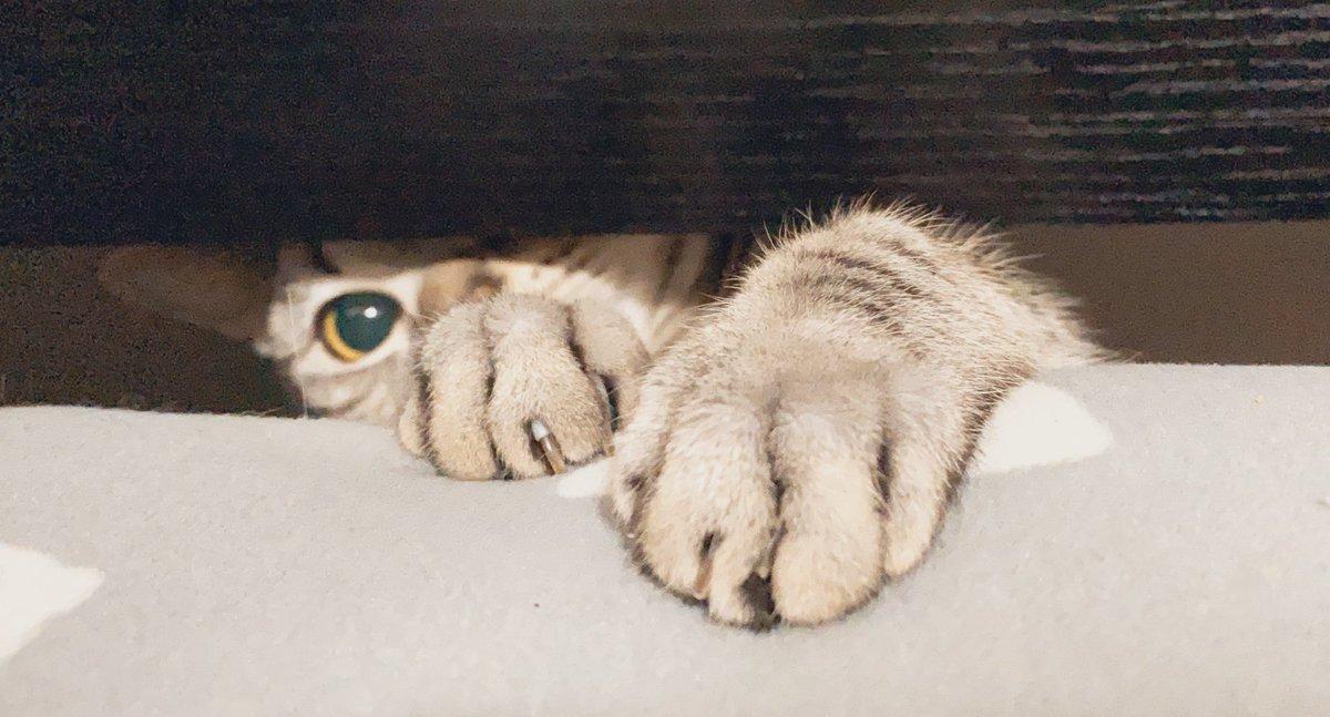 猫又おかゆ🍙さんの投稿画像