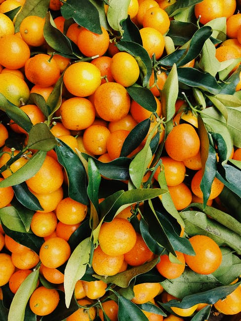 We have 30+ years of expertise in sourcing a variety of delicious citrus from across the globe. We ship citrus year-round, including lemons, oranges, grapefruits, tangerines, and limes. . . .  #FreshProduce #Fruits #Vegetables #Produce #Food #Fresh #Grocery #Producer #Farm #D... https://t.co/8z1uh5Qz7g