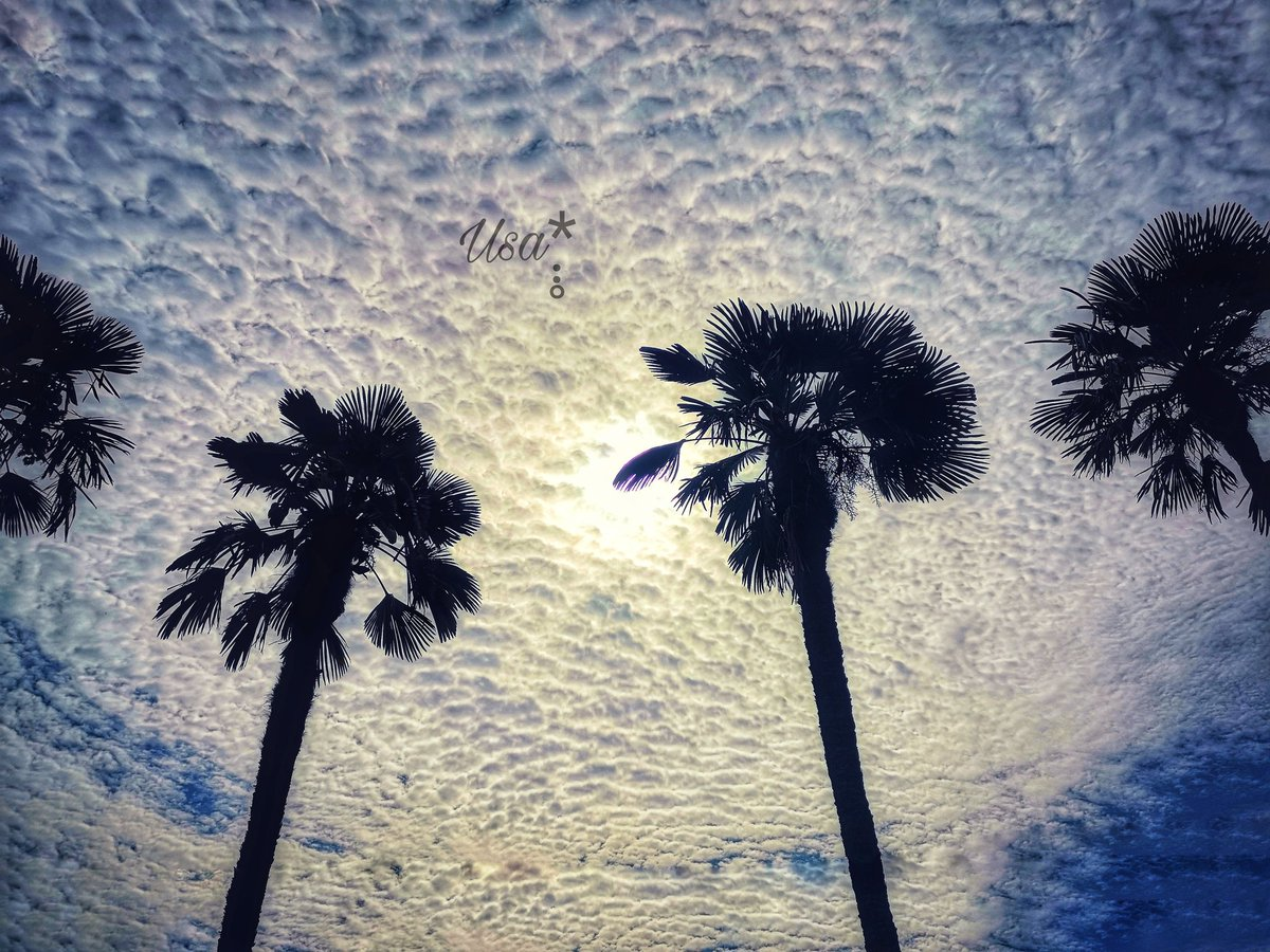 𓂃𓈒𓂂𓏲🌴  おはようございます 一昨日の空  本日も宜しくお願いします (✾ ᴗ͈ˬᴗ͈)◞❤︎*  𓏸𓍯𓂂𓐍𓏸🍓𓂃܀❁ .*゚  #キリトリセカイ #空がある風景 #写真で伝えたい私の世界 #空が好き #雲 #花が好き #photography #photo #お写ん歩 #花写真 #flowers #ヒメツルソバ #ファインダー越しの私の世界 https://t.co/AznugmQSn5