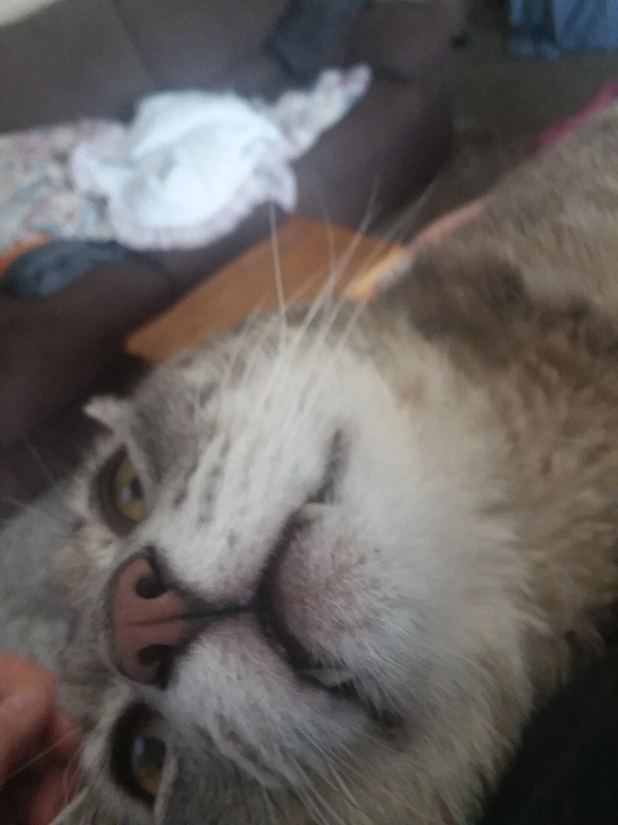 Passive-Agressive teefies   #Cats #Cat #Kittens #Kitten #Kitty #Pets #Pet #Meow #Moe #CuteCats #CuteCat #CuteKittens #CuteKitten #MeowMoe    https://t.co/NE43QeWbwb https://t.co/EBfjjETbaZ