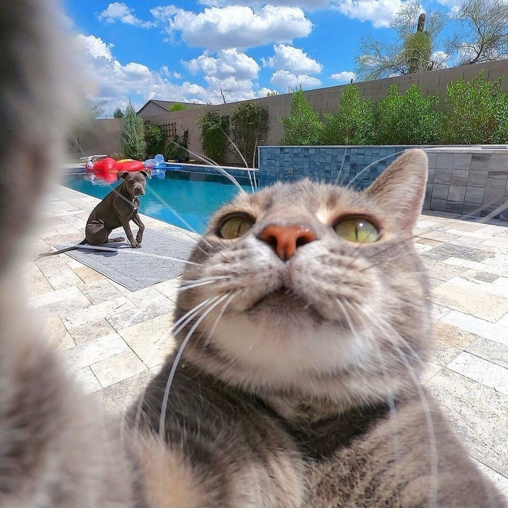 This cat takes selfies like my mom via /r/funny https://t.co/nRdY1y2mxA #funny #lol #haha #humor #lmao #lmfao #hilarious #laugh #laughing #fun #wacky #crazy #silly #witty #joke #jokes #joking #epic #funnypictures https://t.co/nEcTyg3tLW