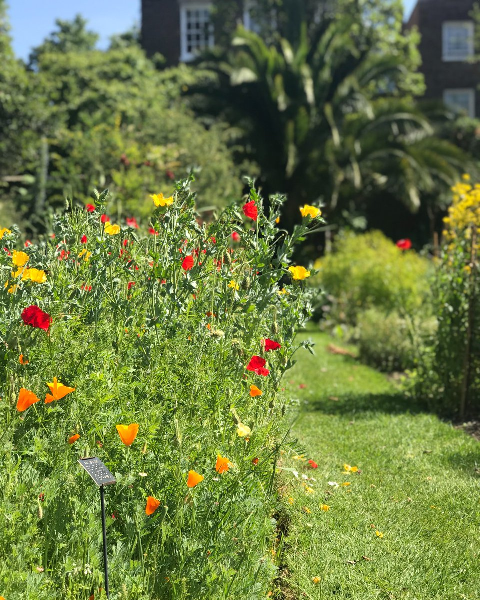New for 2021: Chelsea Physic Garden Spring Plant Fair. Enjoy our beautiful Garden whilst browsing a range of stalls with plants for everyone's tastes. Food and drink available and talks and workshops too! ow.ly/SlZI50Ew5AD Saturday 22 & Sunday 23 May, 10am-5pm #plantfair