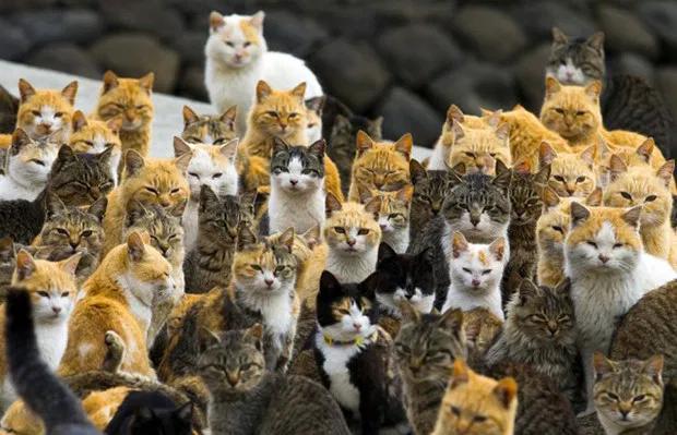 #PetsContraViihTube os gatos do meu bairro nesse exato momento indo votar na viihtube https://t.co/8L2lM3nrUw