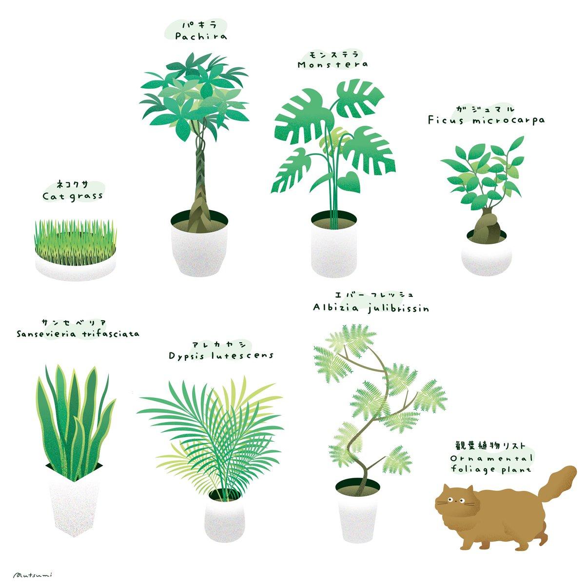 猫を飼っているけど観葉植物を置きたいとき参考になるかも?猫にも安心とされる観葉植物のリスト!