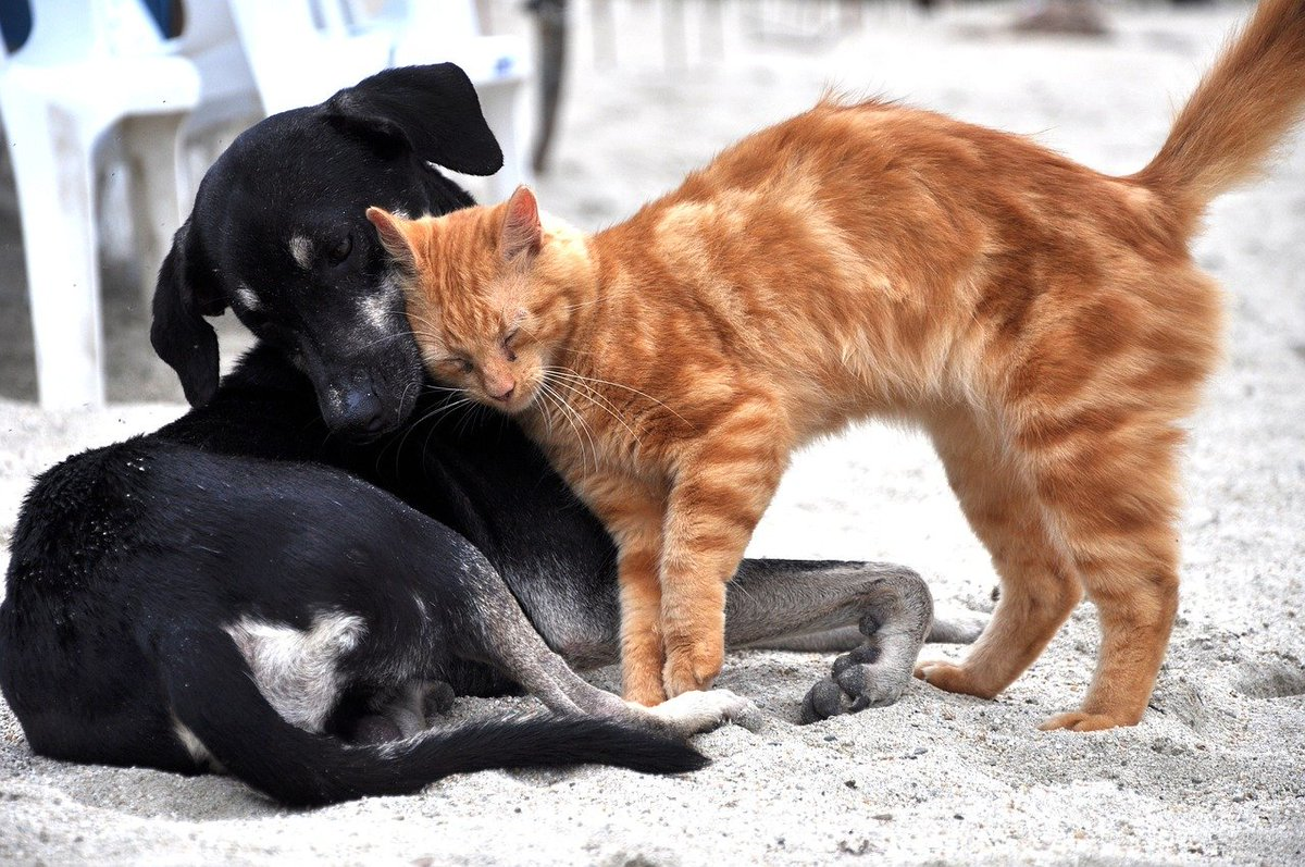Happy World Animal Day! Today was chosen because the date is that of the Feast of St Francis of Assisi, who is the patron saint of animals. Image by María Fernanda Pérez from Pixabay