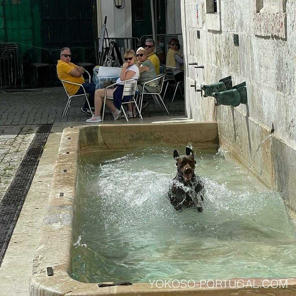 test ツイッターメディア - お水に入ってはしゃぎまくる犬。 #リスボン #ポルトガル #いぬ https://t.co/fl8BHAZis7