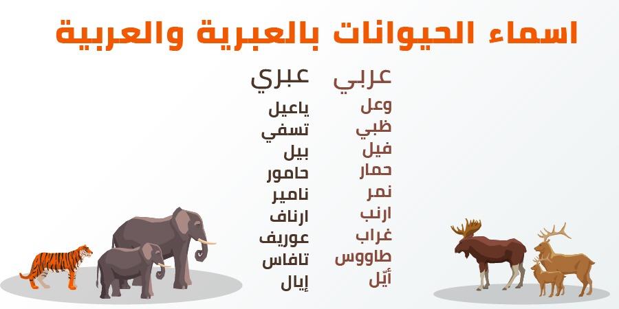 اسماء الحيوانات باللغة العبرية والعربية …انظر الى اوجه التشابه بين اللغتين