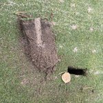 Image for the Tweet beginning: Demo with @agccturf @athagolf 3x3