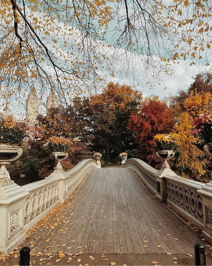 Central Park in Autumn 🍂