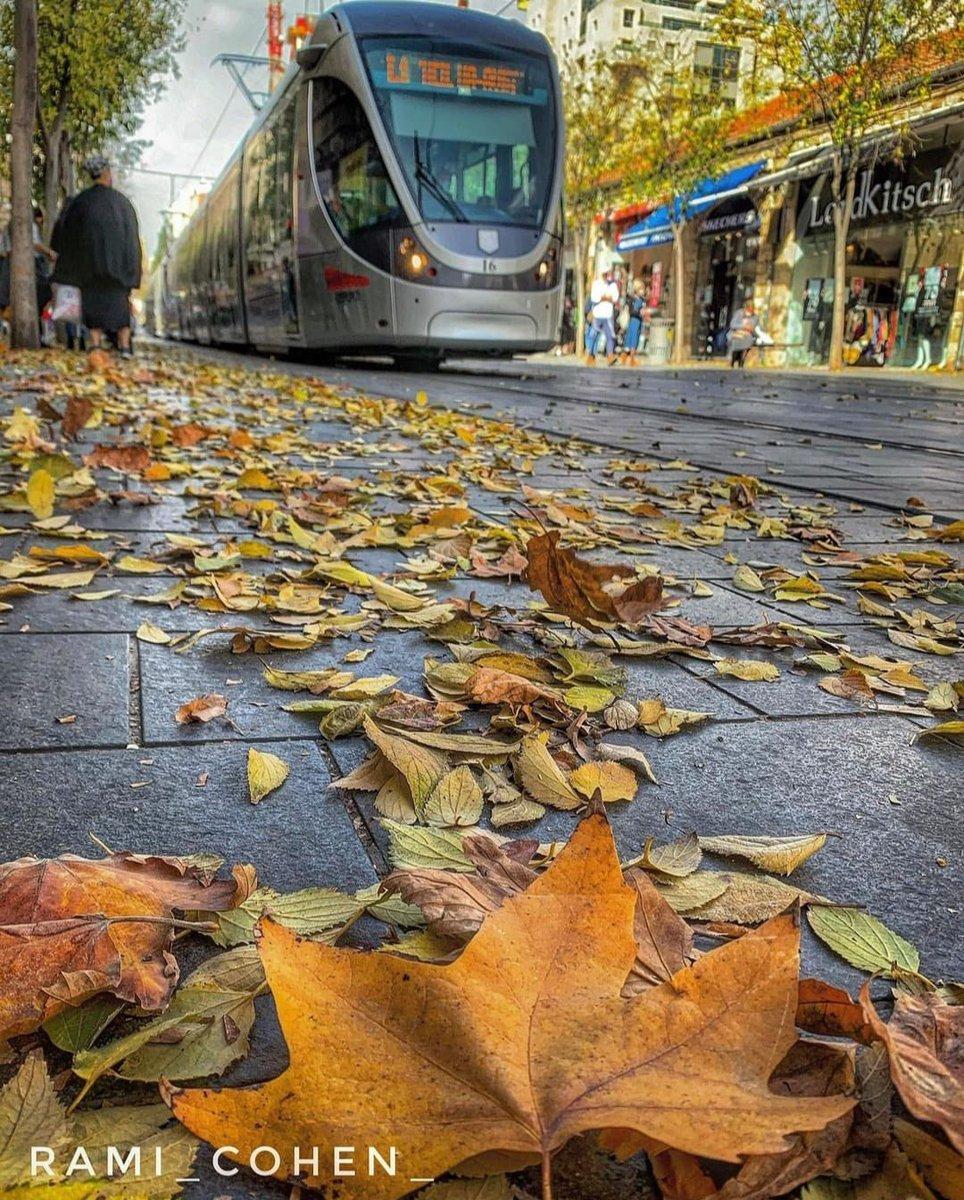 هل الخريف ! بعد صلاة الاستسقاء في عيد المظلة حلت البركة وجمعة مباركة Rami Cohen