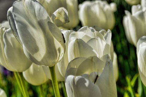 RT @DianaMSharpton: Mine is Love #Poetry #KeithUrban #MusicVideo #DianaMarySharpton https://t.co/YduMRLvzov https://t.co/NSwUsN9s2T
