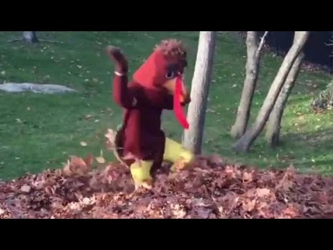 New post (Is that Tom Brady in a turkey suit?) has been published on News, Information And..... - https://t.co/shmigBN89h https://t.co/sc43GnoclY