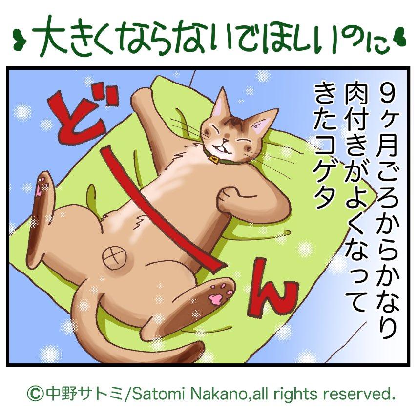 前回のnote公開分です更新!#そのネココゲタ?ep90 ダイエット大作戦編 その1宜しくお願いします😊note でまとめて連載中#猫がいる暮らし #猫漫画