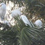 Image for the Tweet beginning: Se fueron los cisnes....llegaron las